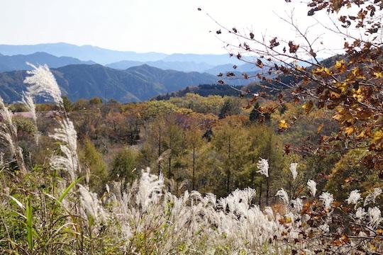 登山道6.jpg